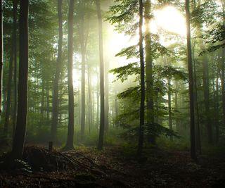 Обои на телефон туман, утро, лес, fog in the morning