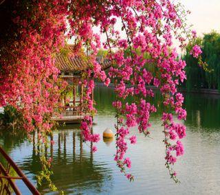 Обои на телефон расцветает, весна, приятные, взгляд, spring blossoms
