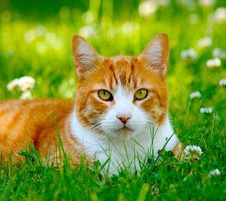 Обои на телефон трава, кошки