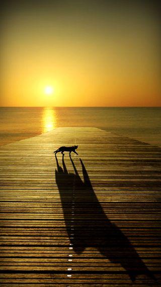 Обои на телефон силуэт, пляж, море, кошки, захватывающие, закат, величественные