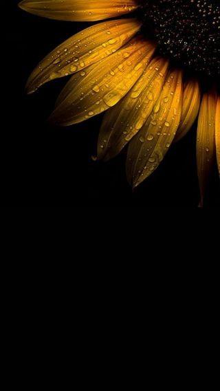 Обои на телефон желтые, черные, цветы, фон, природа, подсолнухи