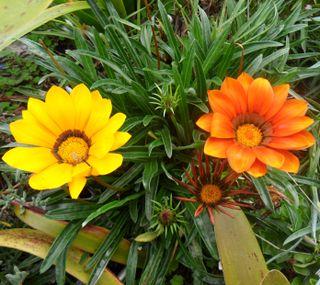Обои на телефон колумбия, цветы