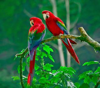 Обои на телефон попугай, птицы, перо, лес, животные