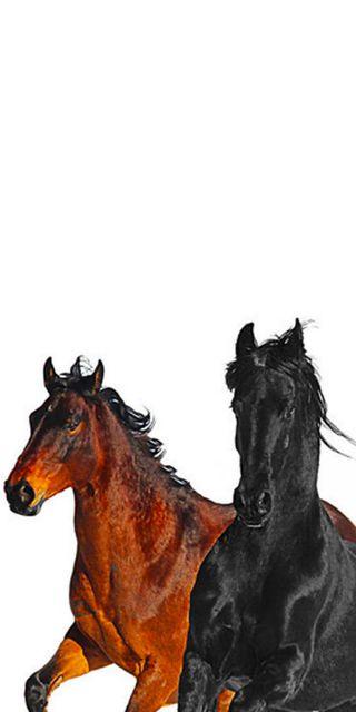 Обои на телефон лошади, черные, стена, старые, лошадь, лил, дорога, город, бумага, lil nas x, billyraecyus