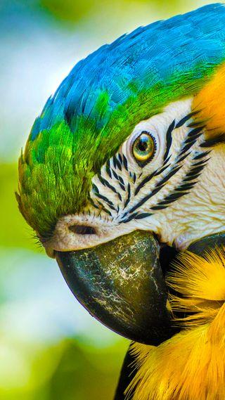 Обои на телефон попугай, красочные, красота