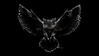 Обои на телефон сова, страшные, птицы, scary owl 1, scary owl