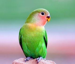 Обои на телефон птицы, прекрасные, попугай, питомцы, животные