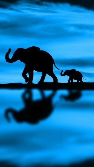 Обои на телефон слон, самсунг, новый, животные, айфон, samsung, lg, iphone x