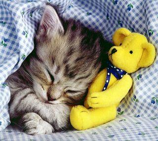 Обои на телефон питомцы, милые, малыш, любовь, котята, животные, sleepy baby kitty, love