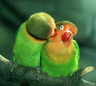 Обои на телефон питомцы, птицы, животные