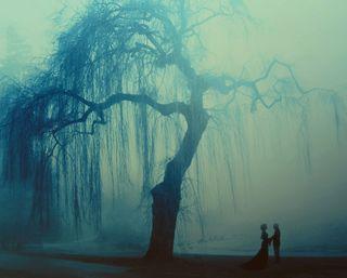 Обои на телефон свадьба, любовники, романтика, пара, ночь, любовь, деревья, брак, love