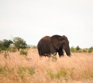 Обои на телефон слон, животные