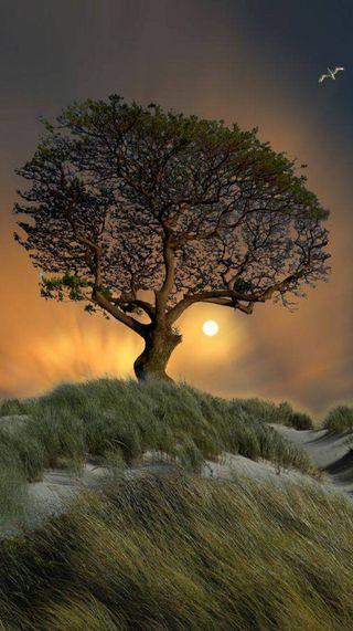 Обои на телефон вечер, природа, пейзаж, ночь, дерево, evening hd