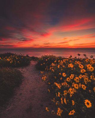 Обои на телефон фото, солнце, пшеница, природа, пляж, новый, закат, new wallpapers
