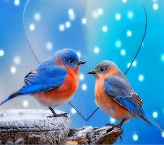 Обои на телефон боке, синие, сердце, птицы, прекрасные, милые, любовь, красочные, love