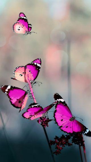 Обои на телефон бабочки, розовые