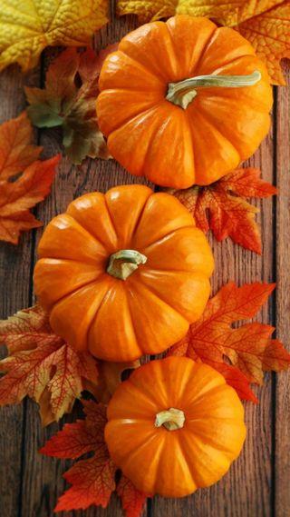 Обои на телефон тыква, осень, листья, trefoil pumpkins