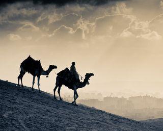 Обои на телефон пустыня, темные, силуэт, закат, египет, город, sands, caravan, camels