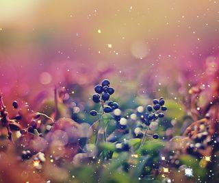 Обои на телефон ягоды, трава, природа