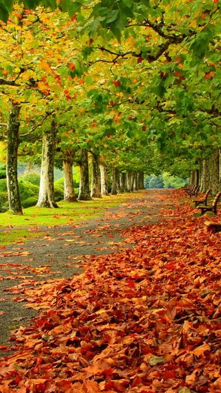Обои на телефон сад, осень, листья