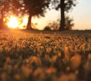 Обои на телефон макро, трава, солнце, природа, пейзаж, день, восход