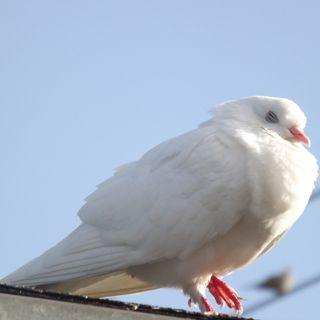 Обои на телефон сон, птицы, мир, голубь, sleep in peace