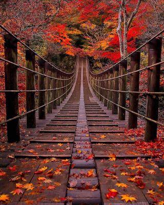 Обои на телефон будущее, удивительные, мост, bridges