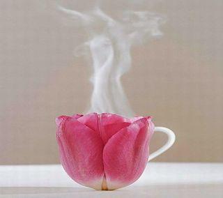 Обои на телефон чай, розы, rose-tea