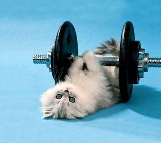 Обои на телефон сильный, новый, милые, кошки, кошачий, котята, животные, weight, strong cat
