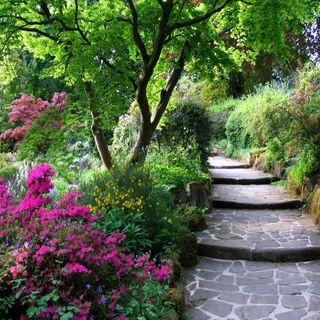 Обои на телефон путь, природа, пейзаж, лес, зеленые, естественные, дерево