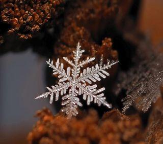 Обои на телефон снежинки, один, снег, макро, лед, крошечный, зима, белые, single snowflake