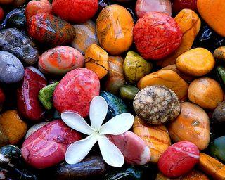 Обои на телефон дзен, цветы, цветные, спокойствие, камни, вода
