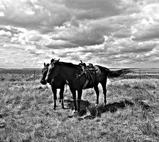 Обои на телефон лошади, лошадь, ковбой, вестерн, saskatchewan, prairie, mantario, b/w