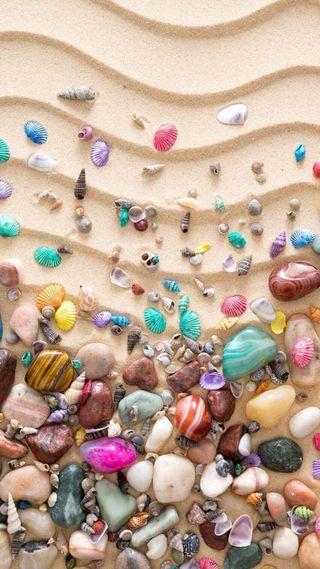 Обои на телефон раковина, море, красочные, sea shells