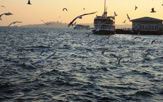 Обои на телефон стамбул, птицы, пляж, пейзаж, море, корабли, sahil