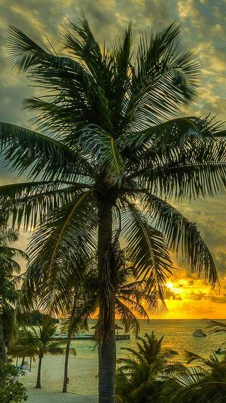 Обои на телефон пальмы, пляж, закат