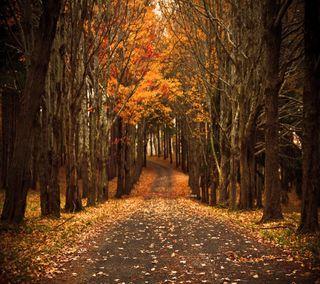 Обои на телефон путь, взгляд, приятные, прекрасные, осень, милые, autumn path