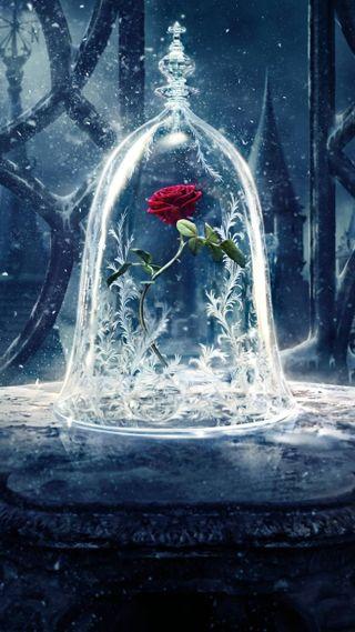 Обои на телефон зверь, розы, красота