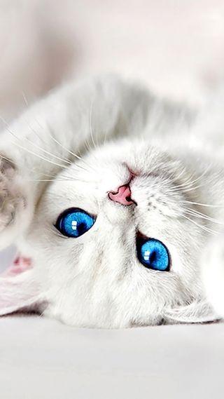 Обои на телефон кошки, милые, котята, белые