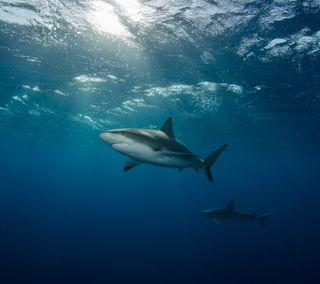 Обои на телефон подводные, акула, рыба, океан, животные