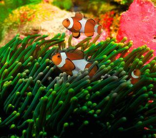Обои на телефон рыби, подводные, немо, кораллы, вода, аквариум