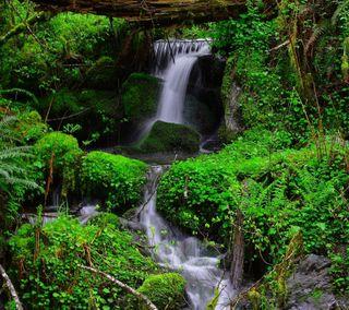 Обои на телефон водопад, река, природа, листья, лес, vegetation