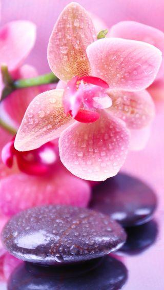 Обои на телефон релакс, цветы, спа, розовые, орхидея, капли, камни, вода