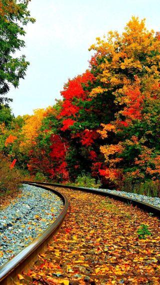 Обои на телефон цветные, рельсы, природа, осень, дорога, autumn road