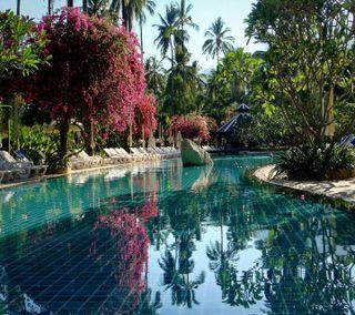 Обои на телефон сад, приятные, прекрасные, милые, взгляд, pool garden