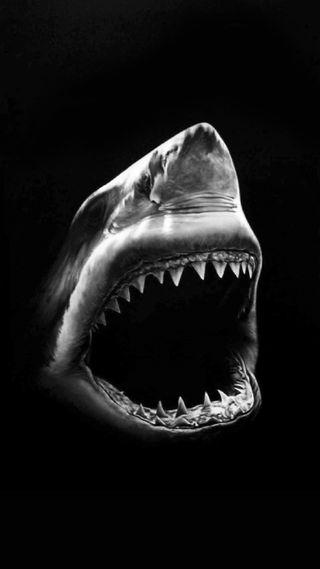 Обои на телефон черные, белые, животные, злые, акула
