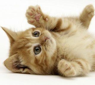 Обои на телефон питомцы, милые, кошки, забавные, животные