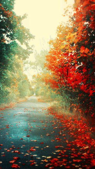 Обои на телефон природа, листья, дорога, деревья