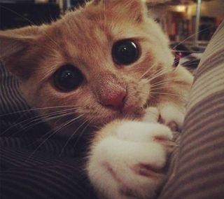 Обои на телефон мяу, котята, милые