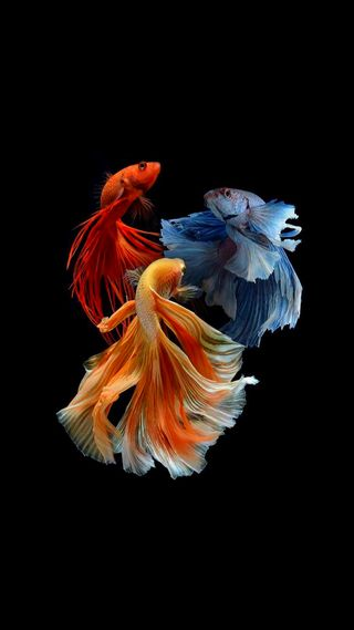 Обои на телефон оранжевые, синие, рыби, рыба, красые, hd